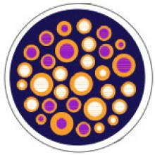 Phloem blocked by pathogens